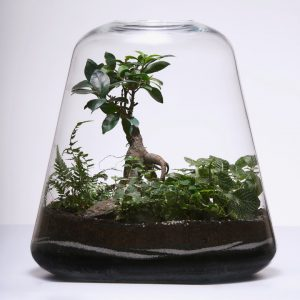 Terrarium_Photo studio_Photographe professionnel Bordeaux_Thierry Pousset