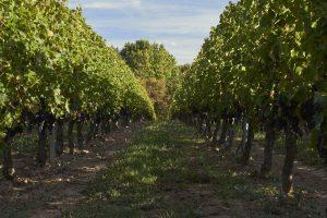 reportage photo - Vignoble français - Domaine viticole - Thierry Pousset - Photographe professionnel - Bordeaux - Gironde - Nouvelle aquitaine