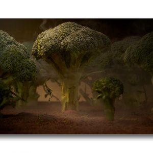 Photographie d'art - print art - Forêt de Brocoli - impression d'art - Thierry Pousset Photographe professionnel